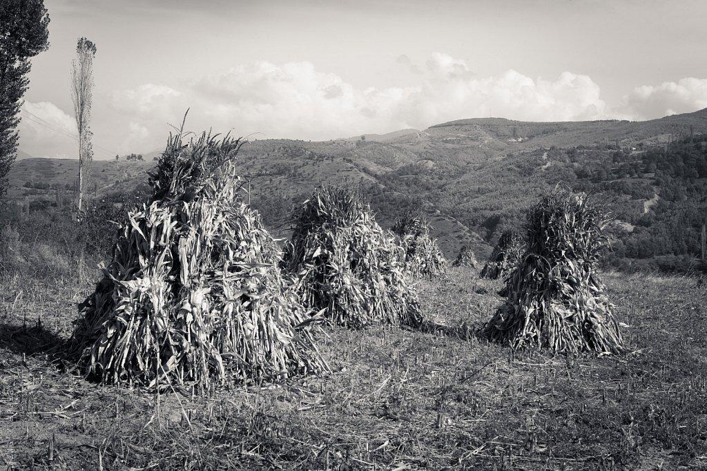 Maisstroh – Albanien, 2018